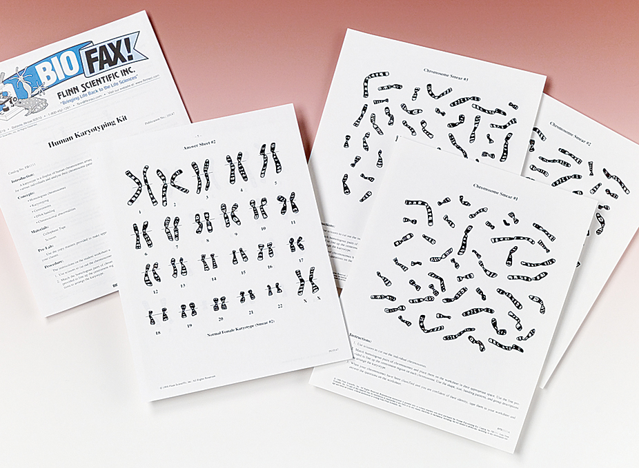 Human Karyotyping Super Value Kit